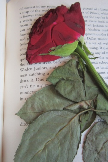 The latest addition to my memories, one rose from the bouquet i received on my birthday last week.