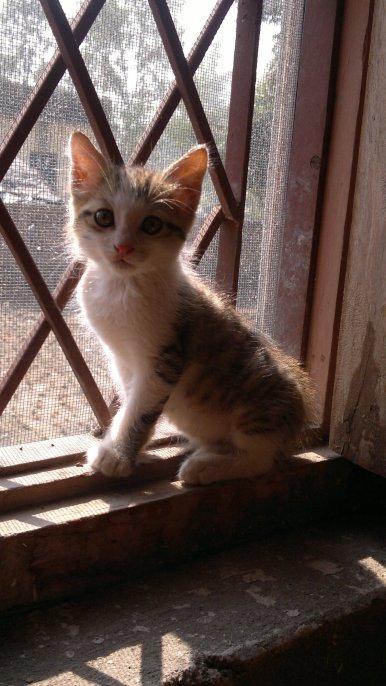 Baby Bhola